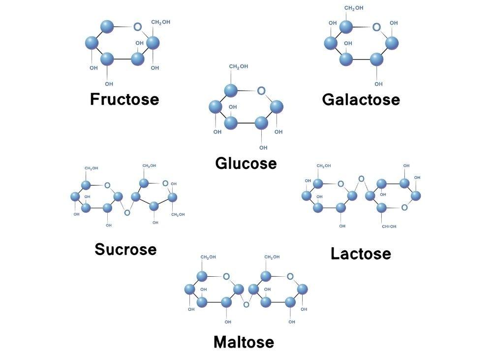 sucre-simple-formule-sucre-rapide-sucre-definition-sucres-simples-et-complexes-sucre-lent-def-sucre-simple-aliment-expose-sur-le-sucre-pdf-sucre-etymologie-fibres-amidon-saccharose-glucose-fructose-maltose-sucrose-lait-miel